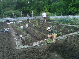 Transplanting_tomatoes_05-11